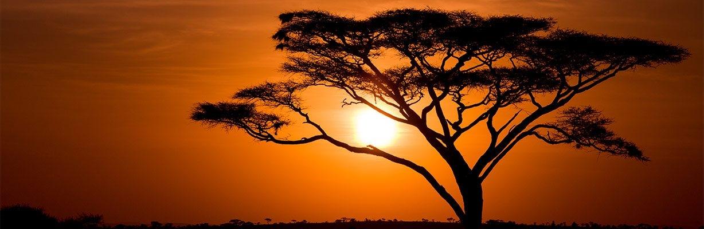 Akazienbaum – COMNATA Esstisch