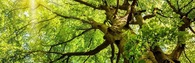 Der Buchenbaum – COMNATA Esstisch