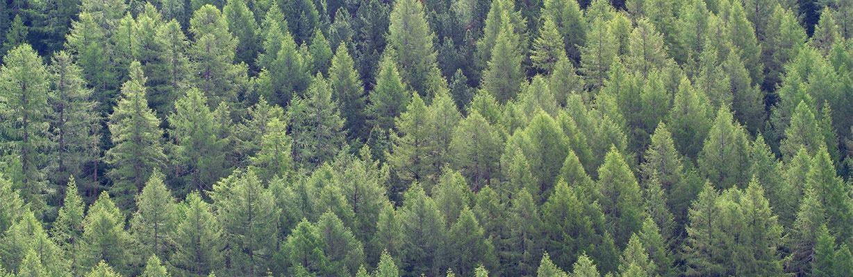 Lärchenbäume – COMNATA Esstisch