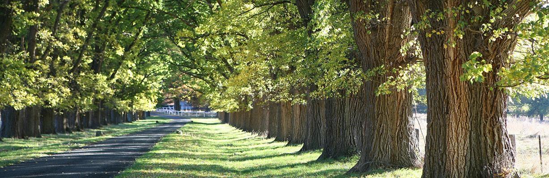 Ulmenbaum– COMNATA Esstisch